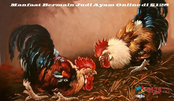 Manfaat Bermain Judi Ayam Online di S128